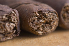 Cuban Cigar. Close-up of Cuban cigar , front of the cigar is in focus, detail of Tobacco Royalty Free Stock Photos