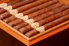Cuban cigar Royalty Free Stock Photo