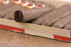 Cuban Cigars in box Royalty Free Stock Image