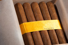 Cuban cigars in box Stock Images