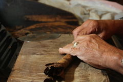 Cuban cigars crafter's hands rolling raw cigars Royalty Free Stock Photography