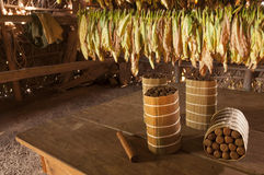 Cuban cigars in drying house Stock Photography