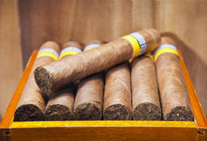 The Cuban cigars, hand made Stock Image