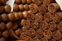 Cuban cigars in a large pile inside a humidor Stock Images