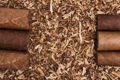 Cuban cigars on tobacco Stock Photo