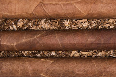 Cuban cigars on tobacco. Background. Three cigars Stock Photography