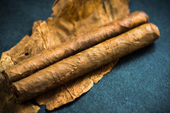 Cuban cigars on tobacco leafs Royalty Free Stock Photos