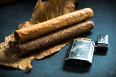 Cuban cigars on tobacco leafs Stock Image