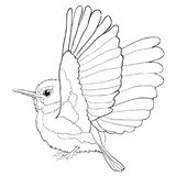 Cuban coloring Tody Bird exotic. vector illustration royalty free illustration