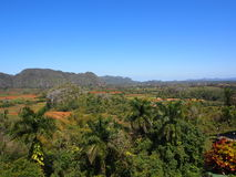 Cuban Countryside With Palm Tdrees And Mogotes Royalty Free Stock Photography