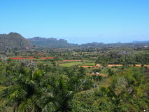 Cuban Countryside With Palm Tdrees And Mogotes Royalty Free Stock Photo