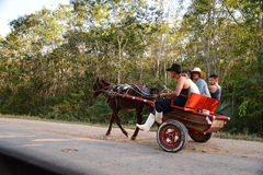 Cuban drive horse cariage Royalty Free Stock Image