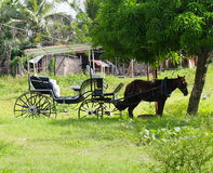 Cuban Horse And Buggy. Horse hitched to buggy resting under shade tree Royalty Free Stock Images