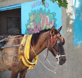 Cuban Horse And Market Stock Images