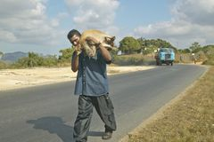 Cuban man carrying his pig to the market in rural Cuba Stock Photography