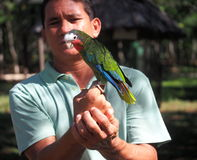 Cuban Man With Parrot Stock Photos