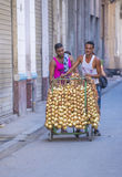 A Cuban onions seller Stock Photography
