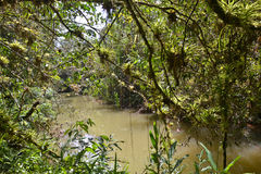 Cuban Rainforest River Stock Images