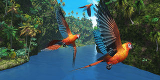 Cuban Red Macaw 2 Royalty Free Stock Photos