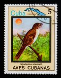 Cuban Solitaire Myadestes elisabeth, Endemic birds, circa 1983. MOSCOW, RUSSIA - AUGUST 29, 2017: A stamp printed in Cuba shows Cuban Solitaire Myadestes stock photo