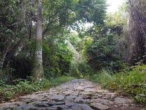 Cuban Stoneway. Cuba forest, way of stones near El Nicho Royalty Free Stock Photo