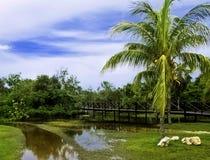 Cuban swamp - Peninsula de Zapata National Park / Zapata Swamp, Cuba Royalty Free Stock Photos