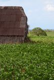 Cuban Tobacco Plantation Royalty Free Stock Photography