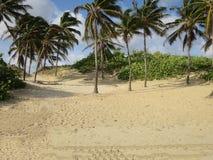Cuban tropical beach Stock Image