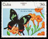 Cubano Cattleheart (ssp do gundlachianus de Parides calzadillae), serie das borboletas, cerca de 1984 ilustração stock