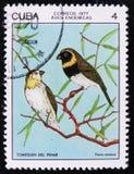 Cubano Grassquit dell'uccello - il canora di Tiaris, bollo proviene dalla serie, circa 1977 Fotografia Stock Libera da Diritti