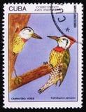 Cubano Grassquit dell'uccello - il canora di Tiaris, bollo proviene dalla serie, circa 1977 Fotografie Stock