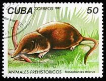 Cubano occidental Nesophontes (micrus) de Nesophontes, serie prehistórico de los animales, circa 1982 ilustración del vector