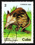 Cubanus Solenodon τρωκτικών, circa 1984 Στοκ Εικόνες