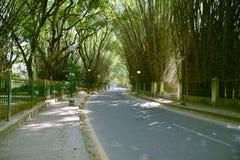 Cubbon parkerar, Bengaluru (Bangalore) Royaltyfria Bilder