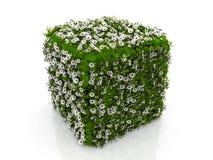 cube трава цветков бесплатная иллюстрация