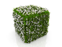 Cube with grass and flowers Stock Photo