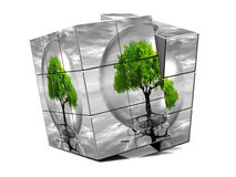 The cube and the tree. The tree and the cube, Do not play with the nature Royalty Free Stock Photography
