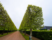 Cube tree alley Royalty Free Stock Image