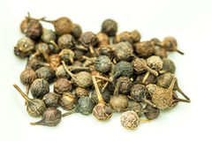 Cubeb, medicinal plant and spice Stock Photos