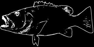 Cubera攫夺者钓鱼在黑背景的掠食性动物 向量例证