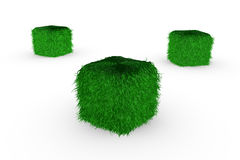 Cubes in grass Royalty Free Stock Photography
