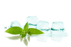 Cubes of ice and leaf mint Stock Images