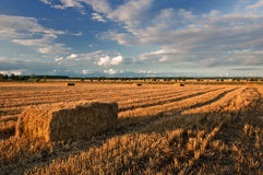 Cubes of straw. Polish field Royalty Free Stock Photography