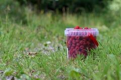 Cubeta completa de framboesas vermelhas maduras fotografia de stock