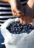 Cubeta de Bluberry Imagem de Stock