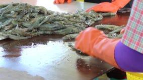 A cubeta do amarelo do uso do trabalhador toma os camarões da cubeta de gelo filme