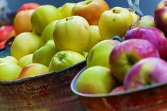 Cubetas das maçãs na exposição Fotos de Stock