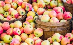 Cubetas de madeira enchidas com as maçãs maduras Imagens de Stock