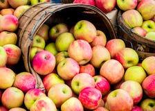 Cubetas de madeira enchidas com as maçãs maduras Imagens de Stock Royalty Free