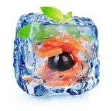 Cubetto di ghiaccio con il filetto di pesce Immagine Stock